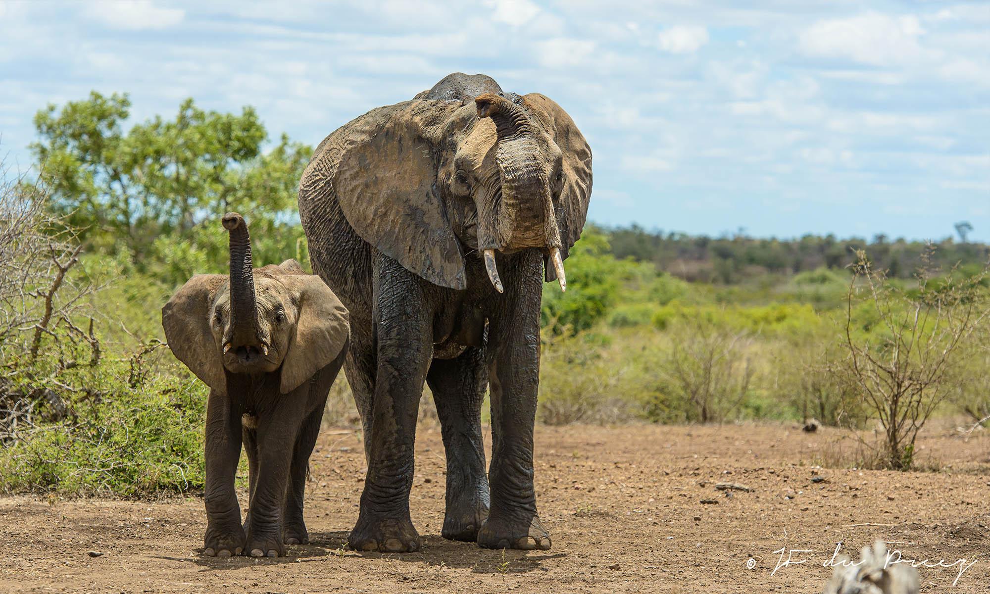 mother&calf
